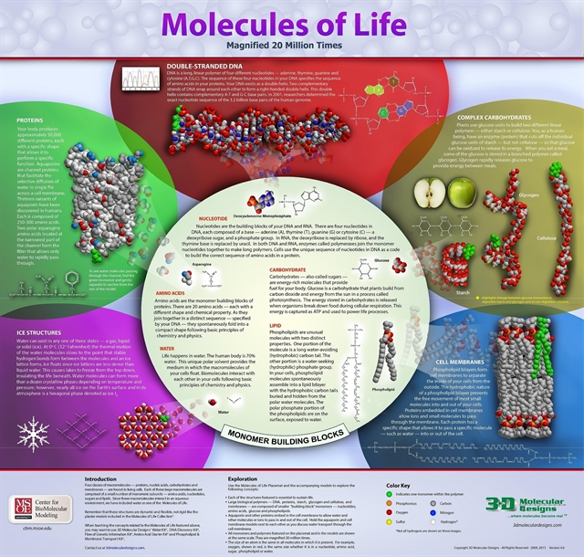 Molecules of Life Collection – Molecules of Life Worksheet
