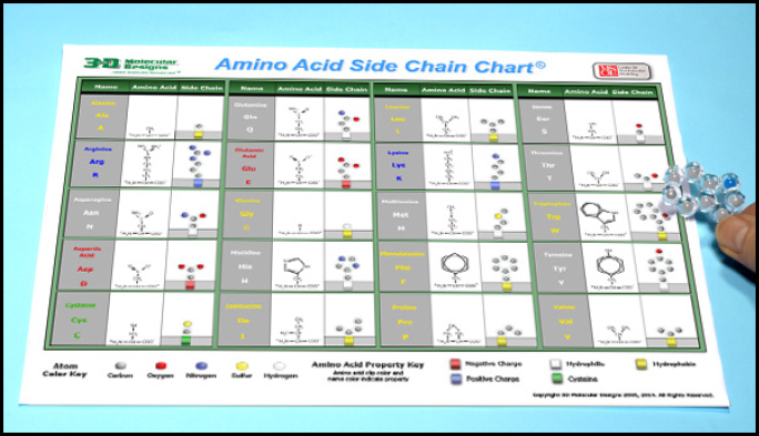 Amino Acid Starter Kit Student Handout  And Key