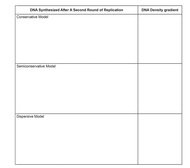 Flow Of Genetic Information Kit Replication Activity Guide Student Handout And Key